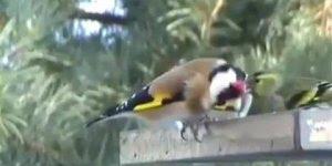 Comedouro para pássaros, uma forma de e-los perto sem gaiolas!!!