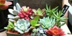 Formas criativas e lindas de ter a natureza sempre perto de você!!!