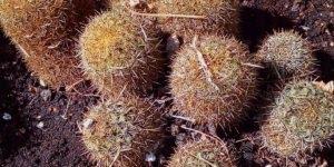 Fotos de cactos, uma planta que é cheia de espinhos, porém linda!!!