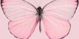 Fotos lindas de borboletas, insetos cheios de cor de delicadeza!!!