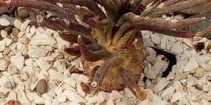 Imagens de Cactos para compartilhar no Facebook, quem ama essa planta?