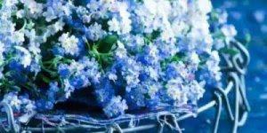 Imagens de flores azuis, mais uma perfeição da natureza!