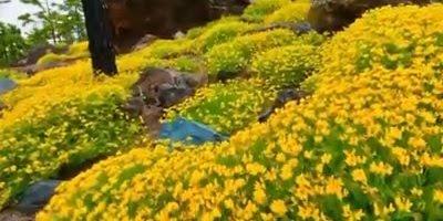 Imagens Maravilhosas da Natureza, nós somos seres privilegiados!