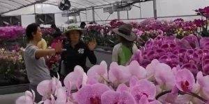 Imagens para quem é apaixonado ou apaixonada por Orquídeas!