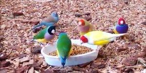 Passarinho comendo livres na natureza, olha só que animais lindos!!!