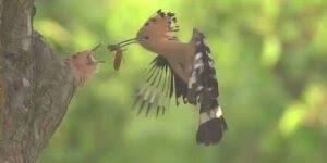 Pássaro alimentando seu filhote no ninho, a natureza é demais!!!