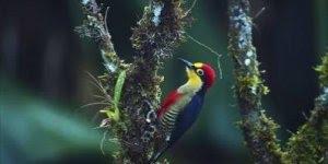 Pica-pau lindo em uma árvore, Deus é perfeito em toda sua criação!!!