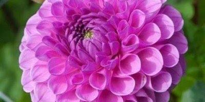 Vídeo com fotos de flores, como a natureza é bonita, vale a pena conferir!!!