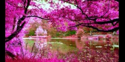 Vídeo com fotos de flores, elas que são os perfumes da natureza!!!