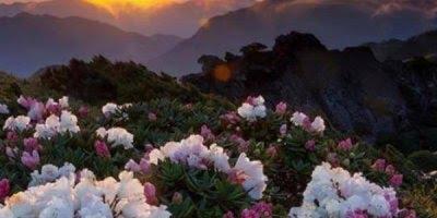 Vídeo com fotos de nossas belíssimas flores, a natureza é maravilhosa!!!