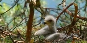 Video com imagens da natureza e linda musica, para compartilhar!
