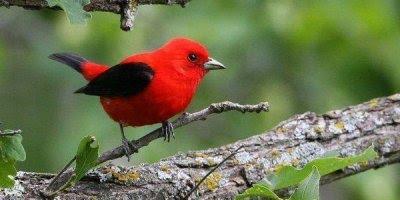 Vídeo com lindas fotos de pássaros de nossa fantástica natureza!!!