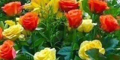 Vídeo com lindas fotos de rosas de todas as cores, vale a pena apreciar!!!