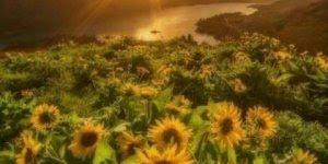Vídeo com lindas fotos do por do sol, vale a pena conferir!!!