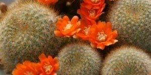 Vídeo lindas fotos de cactos, veja como esta plantinha é linda!!!