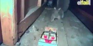 Câmera flagra momento exato em que esquilo é pego por ratoeira, assustador!!!