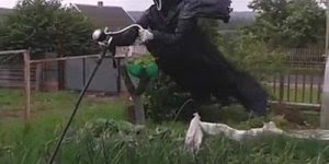 Espantalho assustador, nem eu chegaria perto, que dirá os animais, hahaha!!!