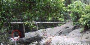 Extraterrestre e flagrado em filmagem no bosque, confira, é assustador!!!