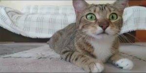Gato assistindo filme de terror, é muito medo para pouco gato hahaha!