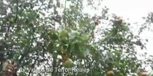 Para você que é fã do paranormal, confira esse vídeo com essa aparição!!!
