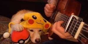 Cachorro é apaixonado pelo Pokémon, veja que coisa mais fofa!