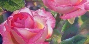 Vídeo de amizade com lindas imagens de rosas, envie para sua amiga especial!!!