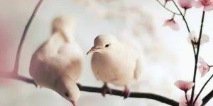 Amor no mundo dos pássaros, uma imagem mais linda que a outra!