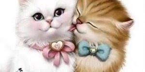 Imagens de amor para Whatsapp, envie para aquele contatinho especial!