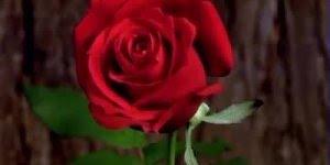 Que esta rosa encha seu coração de amor!!! te amo profundamente!!!