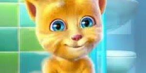 Boa noite divertido com gatinho fofo, para enviar nos grupos do Whatsapp!