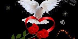 Mensagem de boa noite a todos amigos especiais, tenham uma ótima noite!