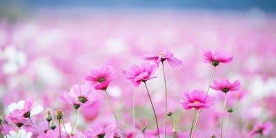 Mensagem de Boa Tarde de Deus com flores, confie Nele e tudo estará salvo!