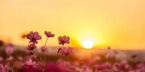 Mensagem de boa tarde, imagine que cada pessoa seja um pensamento de Deus!