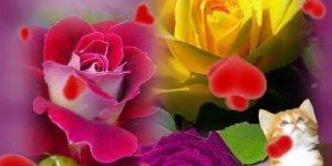 Mensagem de Boa Tarde para amiga especial! Tenha uma linda tarde!!!