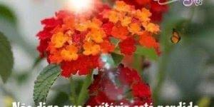Mensagem de Boa Tarde para amigo ou amiga! Nunca desista de seus sonhos!!!