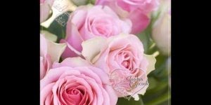 Mensagem de Boa Tarde para amigos! Vamos espelhar amor, energias positivas!