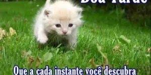 Vídeo com mensagem de Boa Tarde para compartilhar no Facebook!