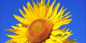 Bom Dia amor! Se você ama alguém envie esta linda mensagem de Bom Dia!!!