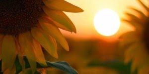 Bom Dia para Domingo - Que seu dia seja guiado por Deus!