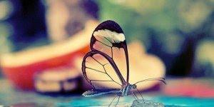 Bom dia terça-feira, descubra o segredo das borboletas neste video!