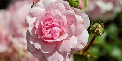 Mensagem de Bom Dia amor! Envie agora mesmo para o amor de sua vida!!!