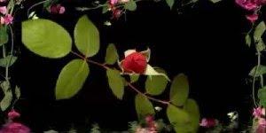 Mensagem de Bom Dia para amigos! A vida é um dom precioso!!!