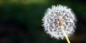Mensagem de bom dia, pare de indagar o que lhe reserva no futuro, vida o hoje!