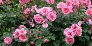 Vídeo de Bom Dia com as mais lindas flores para embelezar seu dia!!!