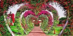 Vídeo de bom dia com flores para perfumar o dia de seus amigos!