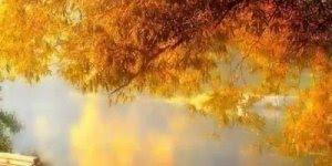 Vídeo de bom dia com paisagens, perfeito para compartilhar no Facebook!