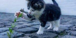 17 de fevereiro é a data oficial dos gatinhos, uma forma de valorizá-los!