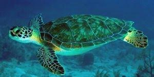 3 de Setembro é Dia do Biólogo, aqueles que pesquisam tudo sobre os seres vivos!