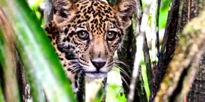 5 de Setembro é Dia da Amazônia, a nossa importante riqueza natural!