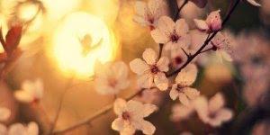 Bom Final de Semana! Que Deus abençoe seu descanso, e te de muita paz!!!
